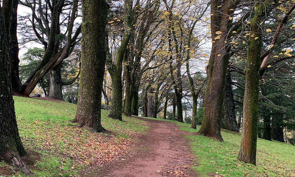 Daylesford Botanical Gardens